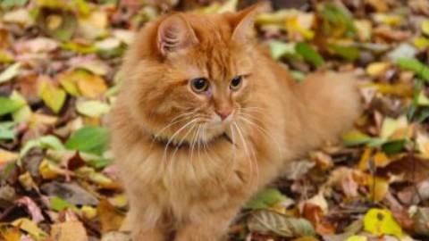 Arriva l'autunno, ecco come il cambio di stagione influisce sul gatto – www.amoreaquattrozampe.it (Blog)