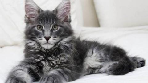 Come avere una casa a misura di gatto – Il Legno Storto