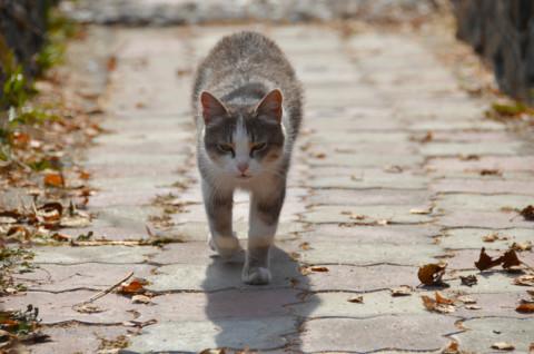 Come prendersi cura dei gatti randagi rispettando la loro natura – Velvet Pets