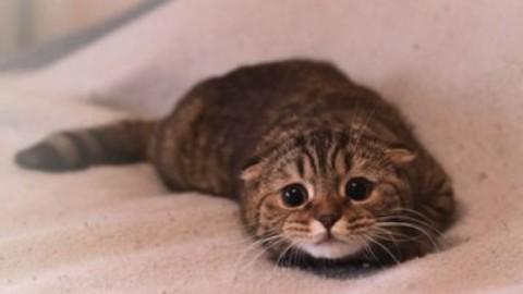 Anche il gatto soffre di ansia da separazione – www.amoreaquattrozampe.it (Blog)