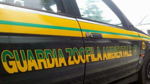 Mogliano Veneto, in arrivo le guardie eco-zoofile – TrevisoToday