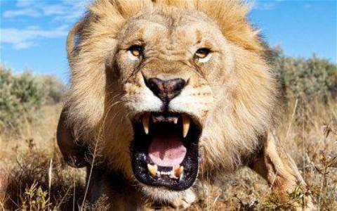 Animali più pericolosi, la Top 10: ci sono leone, squalo e qualche … – www.amoreaquattrozampe.it (Blog)