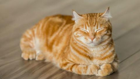 Gatto: 10 esercizi per mantenerlo in forma – GreenStyle
