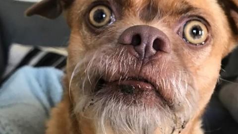 Bacon the Dog, il cane più preoccupato di Instagram [GALLERY] – MondoFox