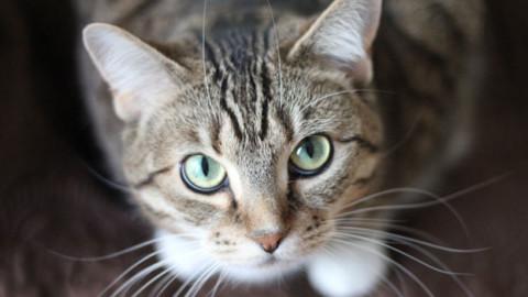 """Nuova Zelanda: niente più gatti domestici, """"Minacciano la fauna … – Vegolosi.it"""
