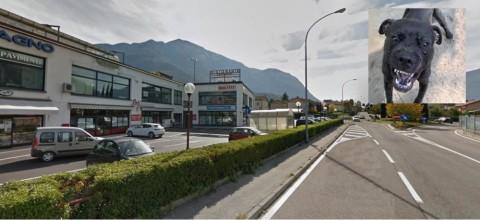 Un pitbull scappa di casa e sbrana due cani in strada … – il Dolomiti