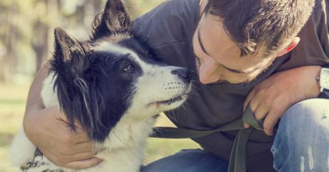 Cani più educati dai proprietari felici – GreenStyle