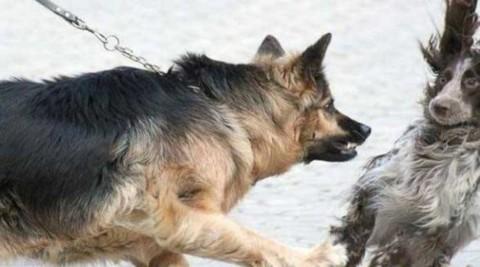 L'aggressività tra cani, comprenderla e saperla gestire – Riviera24