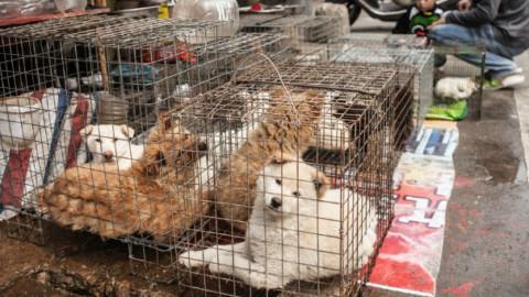 Gli USA contro la carne di cane e di gatto – GreenStyle