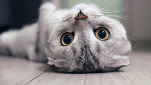 Il rientro dalle vacanze è peggio del previsto? Prendete un gatto … – Aleteia IT