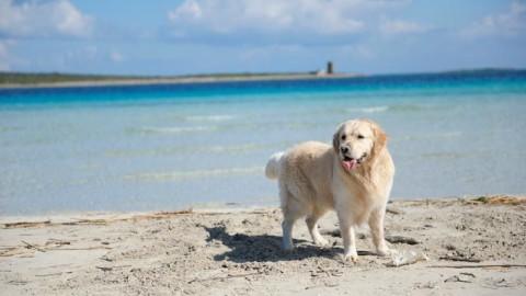 Poetto, super multa a due cagliaritane che portavano il cane in … – Casteddu on Line