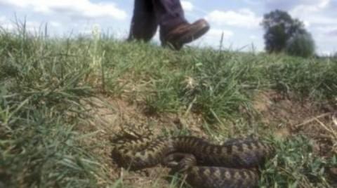 Serpenti velenosi, le stagioni più a rischio: vipere in autunno – www.amoreaquattrozampe.it (Blog)