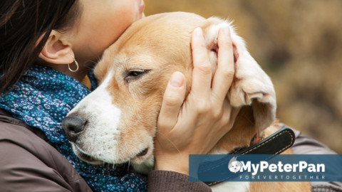 Servizio Completo di cremazione animali domestici MyPeterPan
